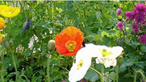 Lakewood-Garden-Center-Flowers